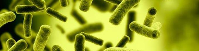 ксантелазма под микроскопом