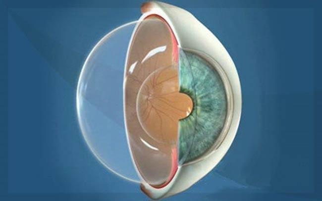 стекловидное тело в глазу