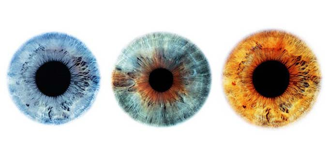 цвет радужки глаз