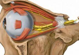 Как и чем вылечить атрофию зрительного нерва