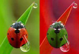 Выявление дальтонизма — проверка цветовосприятия