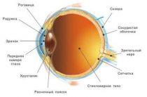 Строение рефлекторной дуги глаза и особенности зрительного пути