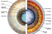 Почему мы видим — как устроены человеческие глаза